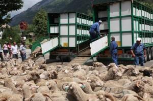 berger pastoralisme transhumance le Bourguet Saint-Etienne-de-Tinée