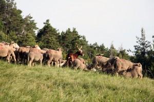 berger transhumance pastoralisme col du Buis Briançonnet