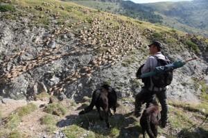 berger pastoralisme élevage Roya Saint-Etienne-de-Tinée