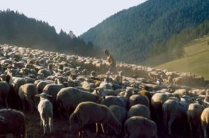 berger pastoralisme élevage Beuil