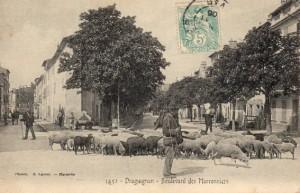 Draguignan berger élevage pastoralisme Provence
