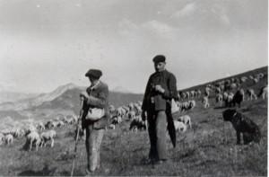 berger pastoralisme élevage transhumance col des Champs