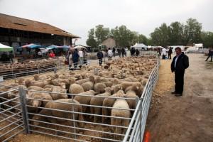 foire Arles berger pastoralisme élevage