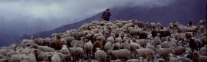 berger pastoralisme Péone élevage