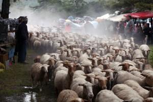 berger transhumance Bargème élevage pastoralisme