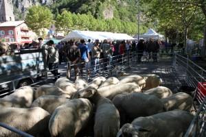 foire Guillaumes berger pastoralisme élevage