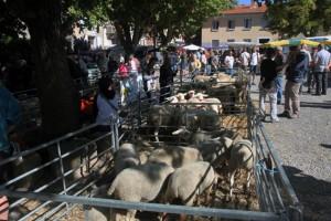 foire Thoard berger pastoralisme élevage brebis